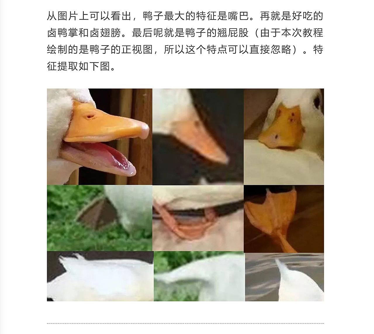 【插画教程】用简单的几何图形,设计上千个动物IP-橘子皮